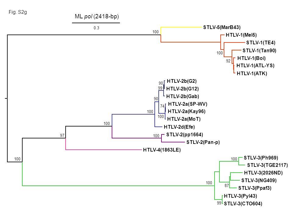 Fig. S2g HTLV-1(ATK) HTLV-1(Boi) HTLV-1(ATL-YS) HTLV-1(Mel5) STLV-5(MarB43) STLV-1(Tan90) STLV-1(TE4) HTLV-3(Pyl43) HTLV-3(2026ND) STLV-3(NG409) STLV-
