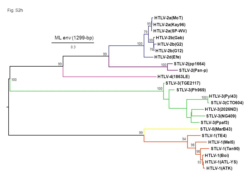 Fig. S2h HTLV-1(ATK) HTLV-1(Boi) HTLV-1(ATL-YS) HTLV-1(Mel5) STLV-5(MarB43) STLV-1(Tan90) STLV-1(TE4) HTLV-3(Pyl43) HTLV-3(2026ND) STLV-3(NG409) STLV-