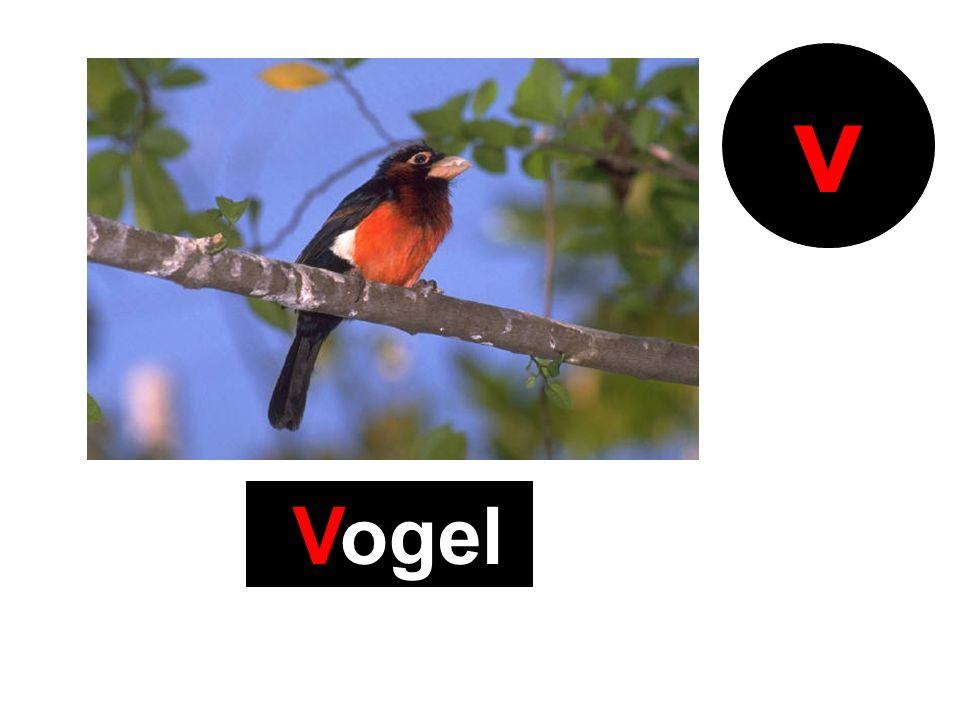 Vogel v