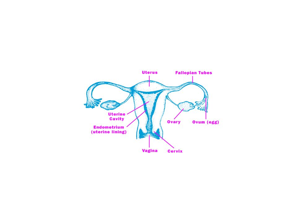 Learning objectives 1.Mechanisms of oral contraception and side effects 2.Out line of female reproductive system and its development 3.Causes of infer