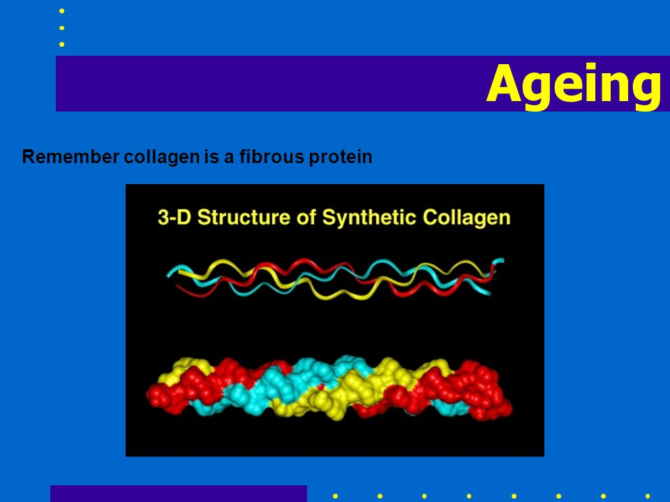 Ageing Remember collagen is a fibrous protein