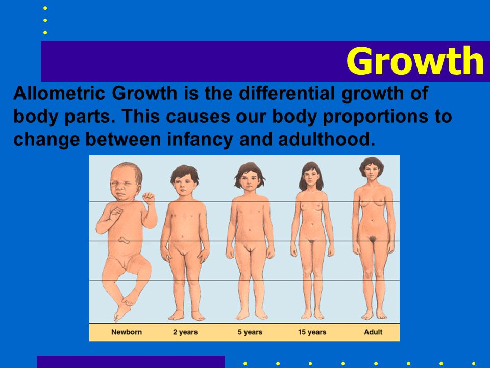Growth Allometric Growth is the differential growth of body parts. This causes our body proportions to change between infancy and adulthood.