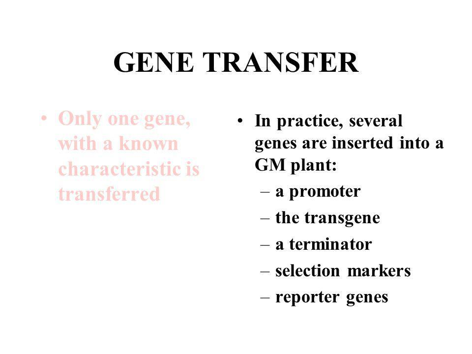 GENE TRANSFER Only one gene, with a known characteristic is transferred In practice, several genes are inserted into a GM plant: –a promoter –the tran