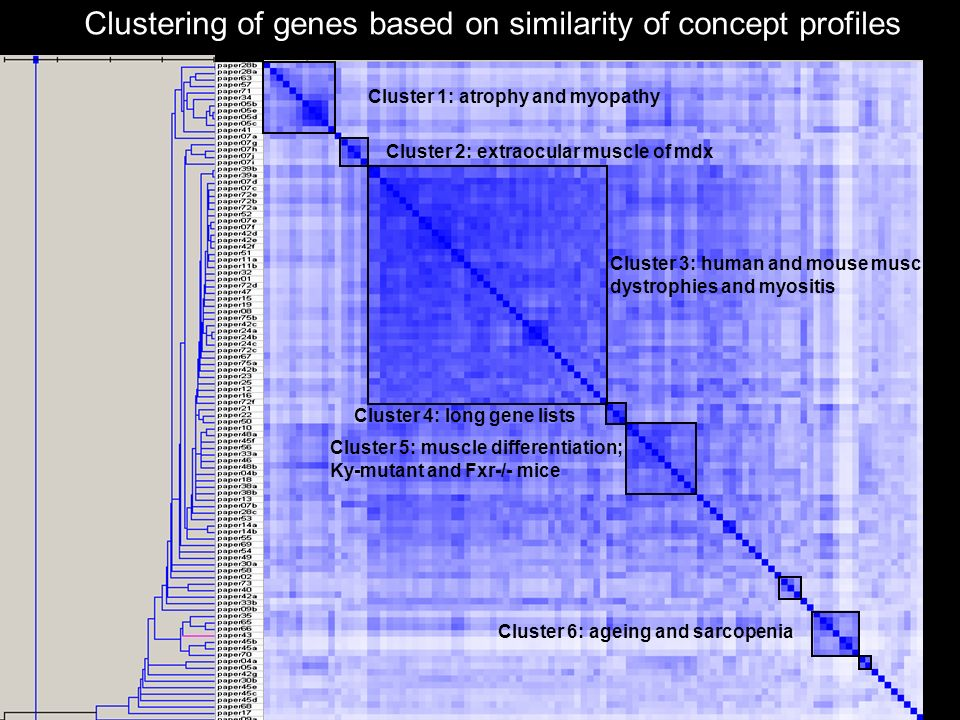 Clustering of genes based on similarity of concept profiles GeneSet Clusterer, Rob Jelier, Erasmus MC Cluster 1: atrophy and myopathy Cluster 2: extraocular muscle of mdx Cluster 3: human and mouse muscular dystrophies and myositis Cluster 4: long gene lists Cluster 5: muscle differentiation; Ky-mutant and Fxr-/- mice Cluster 6: ageing and sarcopenia