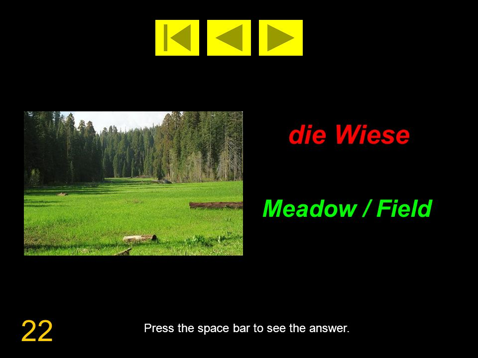 22 die Wiese Meadow / Field Press the space bar to see the answer.