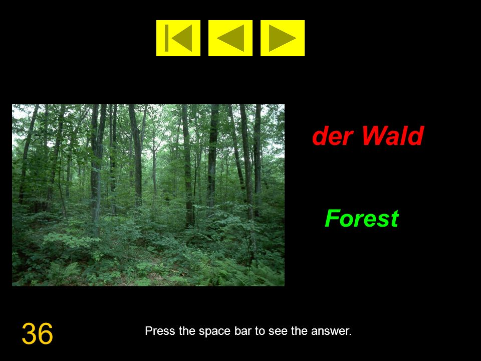 36 der Wald Forest Press the space bar to see the answer.