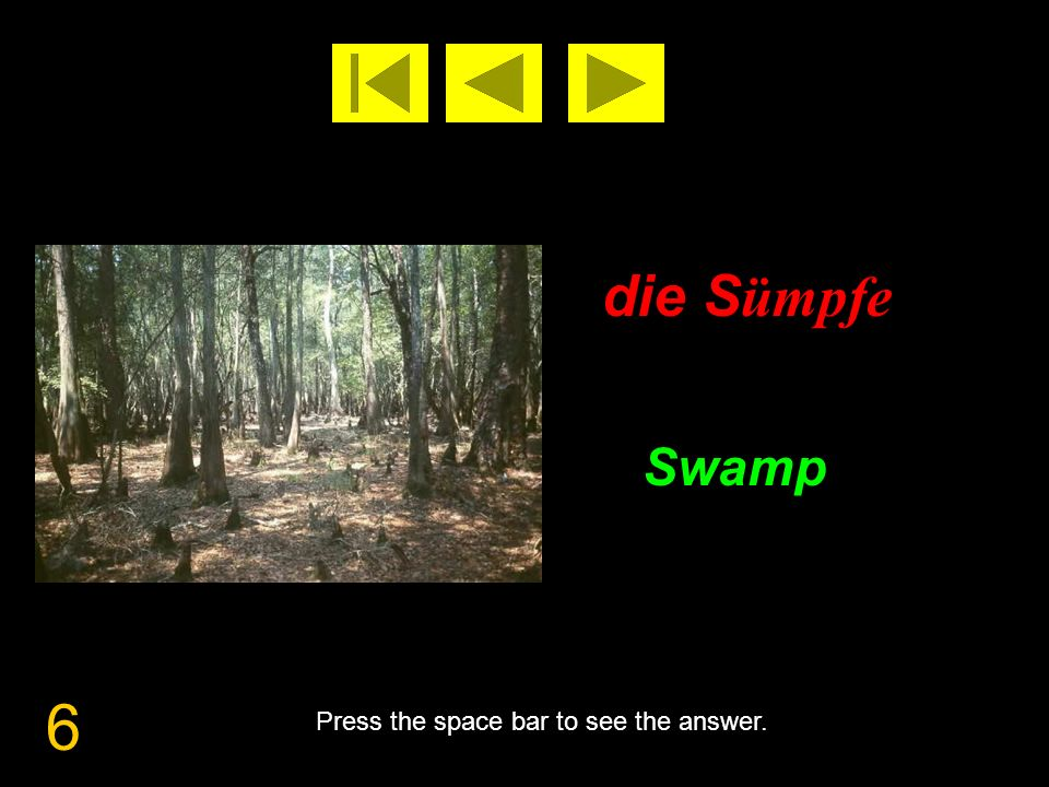 6 die S ümpfe Swamp Press the space bar to see the answer.