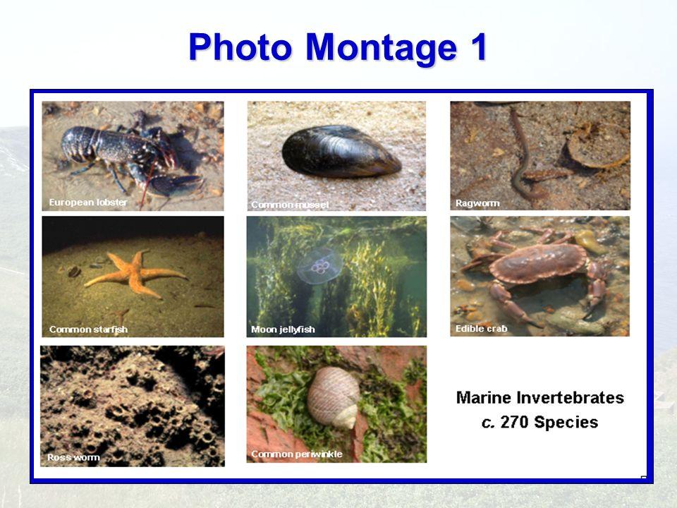 Photo Montage 1