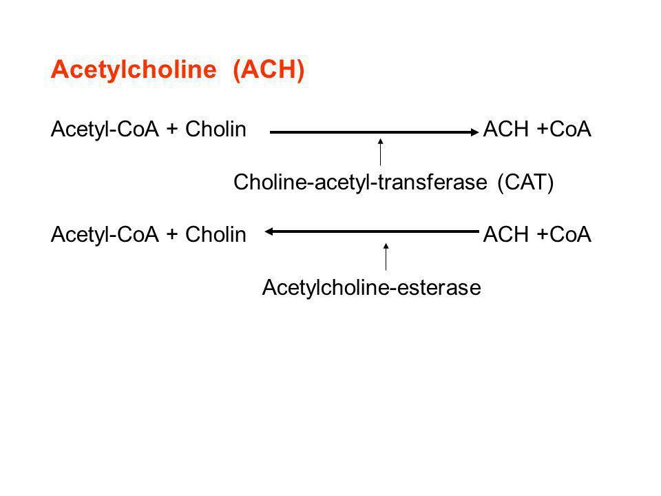 Acetylcholine (ACH) Acetyl-CoA + Cholin ACH +CoA Choline-acetyl-transferase (CAT) Acetyl-CoA + Cholin ACH +CoA Acetylcholine-esterase