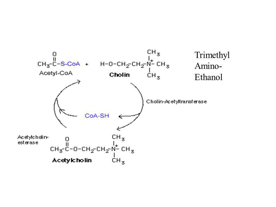 Trimethyl Amino- Ethanol
