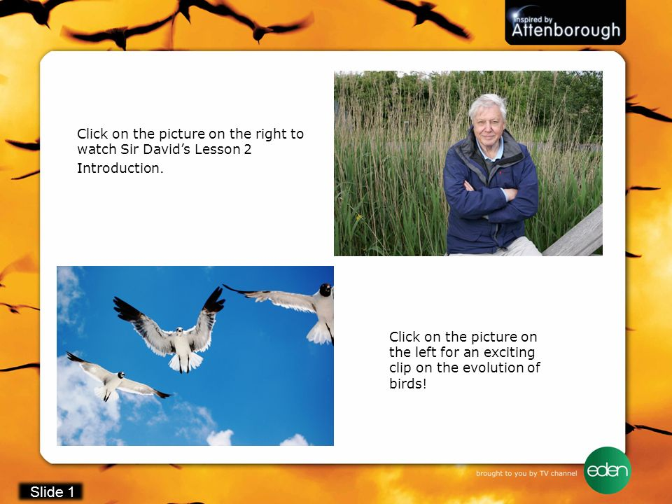 Click on the picture on the left for an exciting clip on the evolution of birds! Click on the picture on the right to watch Sir Davids Lesson 2 Introd