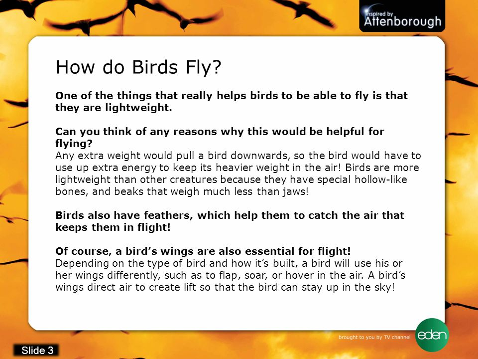 One of the things that really helps birds to be able to fly is that they are lightweight. Can you think of any reasons why this would be helpful for f