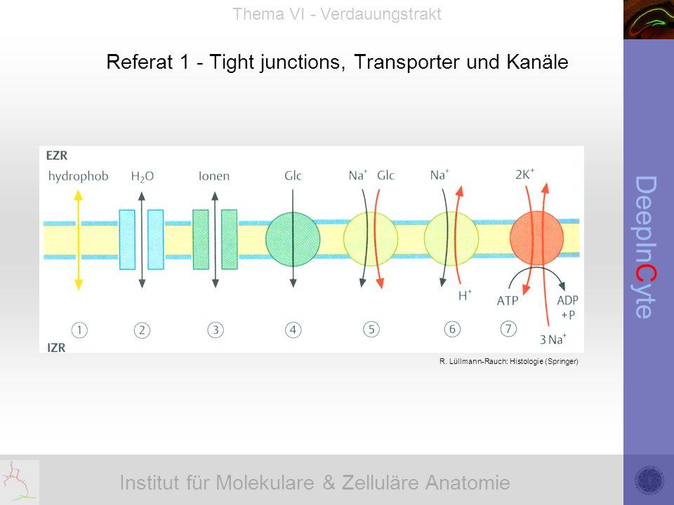 Institut für Molekulare & Zelluläre Anatomie DeepInCyte Thema VI - Verdauungstrakt Referat 1 - Tight junctions, Transporter und Kanäle R.