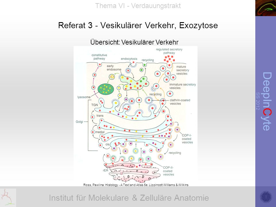 Institut für Molekulare & Zelluläre Anatomie DeepInCyte SS 2012 Thema VI - Verdauungstrakt Referat 3 - Vesikulärer Verkehr, Exozytose Ross, Pawlina: Histology - A Text and Atlas 5e.