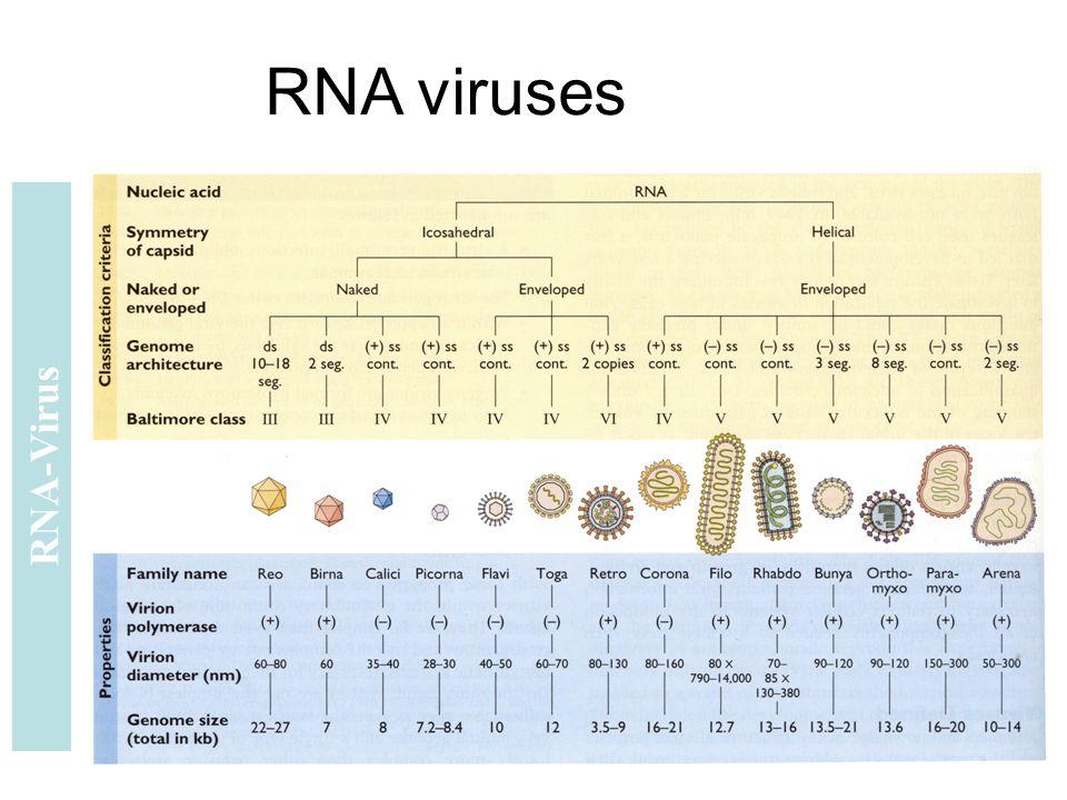 RNA-Virus RNA viruses