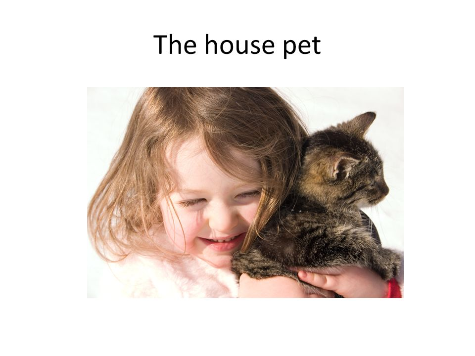 The house pet
