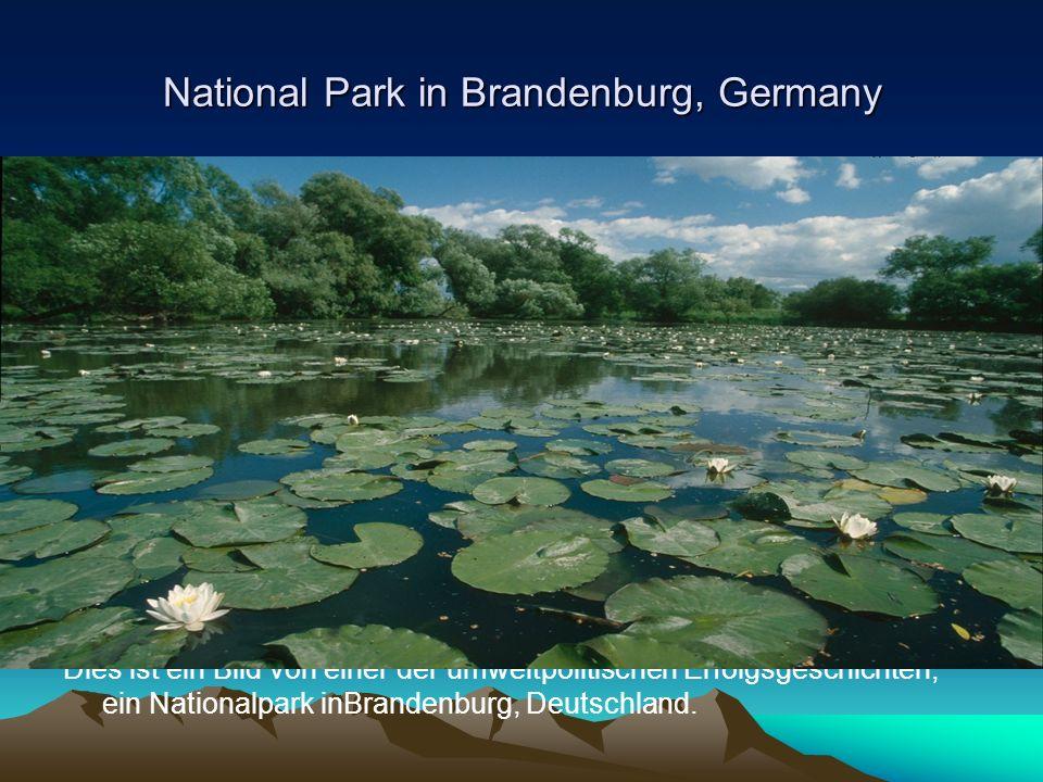National Park in Brandenburg, Germany Dies ist ein Bild von einer der umweltpolitischen Erfolgsgeschichten, ein Nationalpark inBrandenburg, Deutschland.