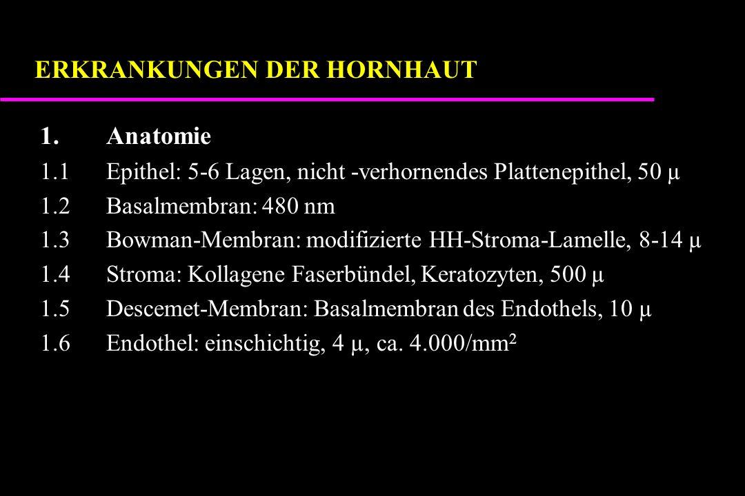 1.Anatomie 1.1Epithel: 5-6 Lagen, nicht -verhornendes Plattenepithel, 50 µ 1.2Basalmembran: 480 nm 1.3Bowman-Membran: modifizierte HH-Stroma-Lamelle, 8-14 µ 1.4Stroma: Kollagene Faserbündel, Keratozyten, 500 µ 1.5Descemet-Membran: Basalmembran des Endothels, 10 µ 1.6Endothel: einschichtig, 4 µ, ca.