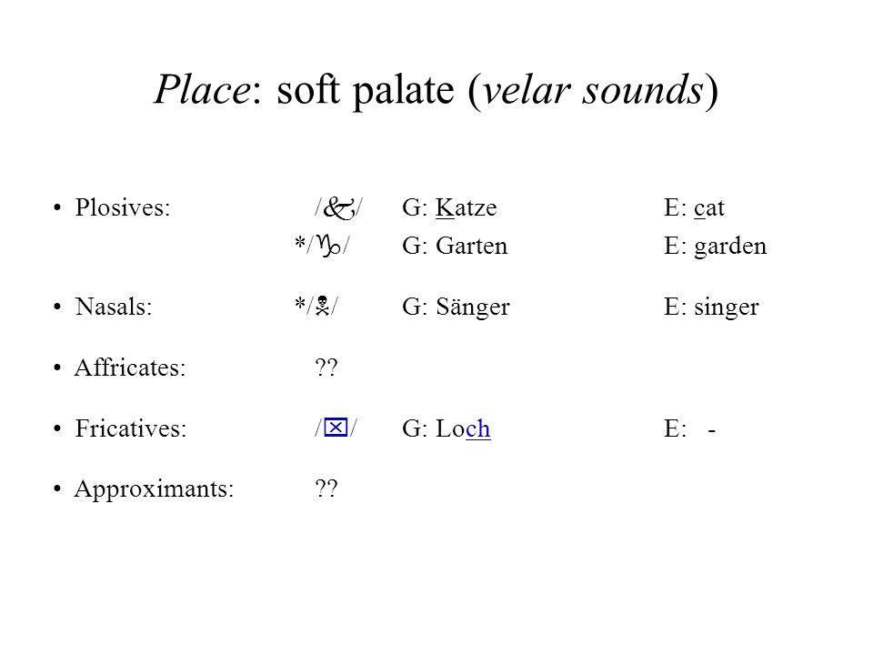 Place: soft palate (velar sounds) Plosives:/ k /G: KatzeE: cat */ g / G: GartenE: garden Nasals: */ N / G: SängerE: singer Affricates: ?? Fricatives: