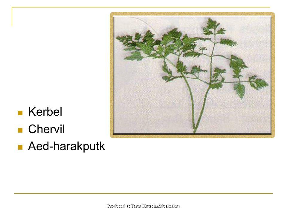 Produced at Tartu Kutsehariduskeskus Kerbel Chervil Aed-harakputk