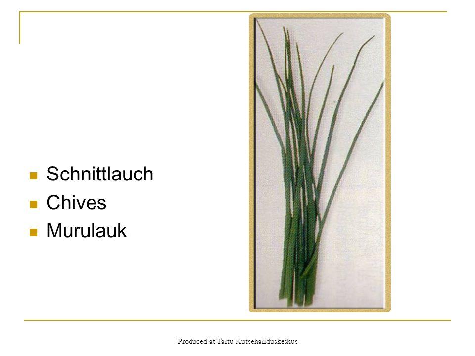 Produced at Tartu Kutsehariduskeskus Schnittlauch Chives Murulauk