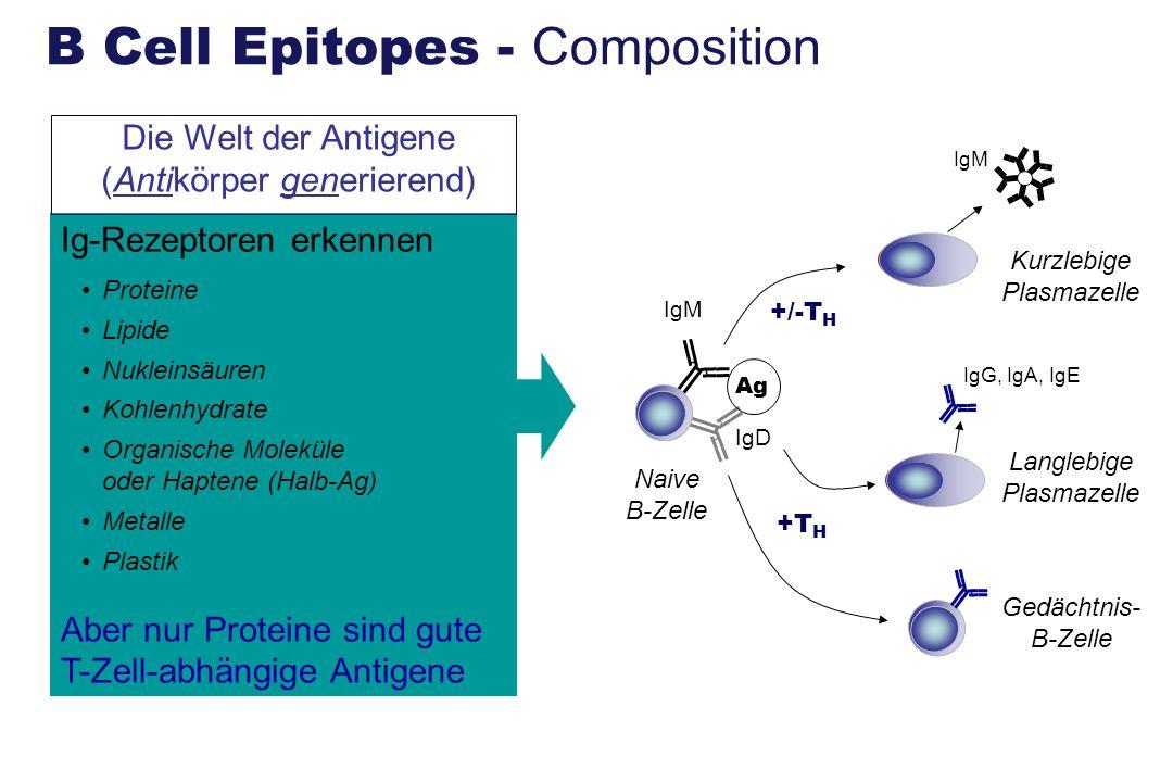 Ig-Rezeptoren erkennen Proteine Lipide Nukleinsäuren Kohlenhydrate Organische Moleküle oder Haptene (Halb-Ag) Metalle Plastik Aber nur Proteine sind g