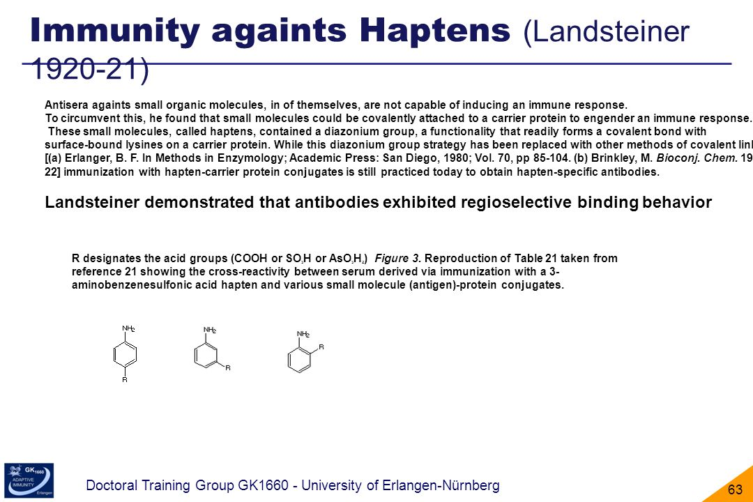 Doctoral Training Group GK1660 - University of Erlangen-Nürnberg 63 Immunity againts Haptens (Landsteiner 1920-21) Antisera againts small organic mole