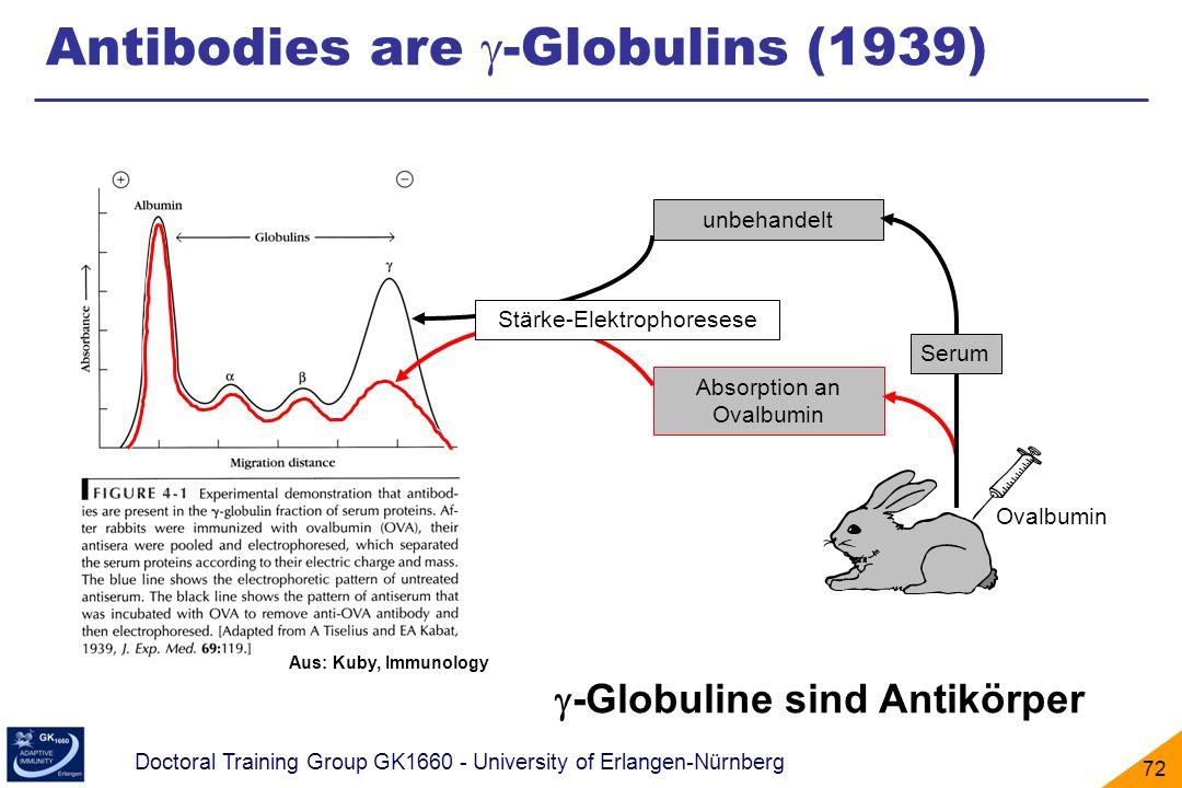 Doctoral Training Group GK1660 - University of Erlangen-Nürnberg 72 Aus: Kuby, Immunology Ovalbumin Absorption an Ovalbumin unbehandelt Serum Stärke-E