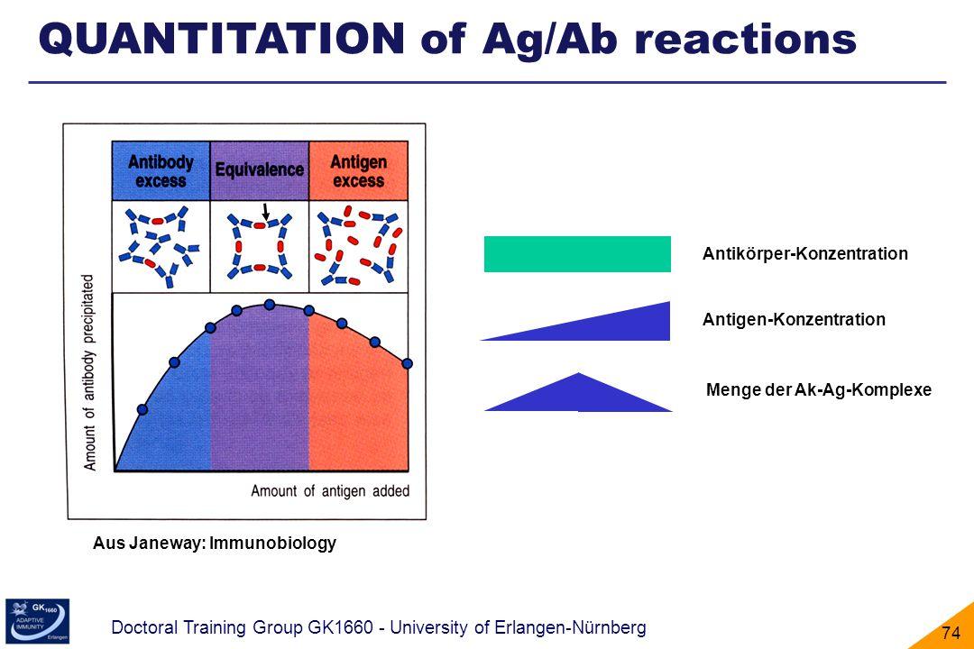 Doctoral Training Group GK1660 - University of Erlangen-Nürnberg 74 Menge der Ak-Ag-Komplexe Antigen-Konzentration Antikörper-Konzentration Aus Janewa
