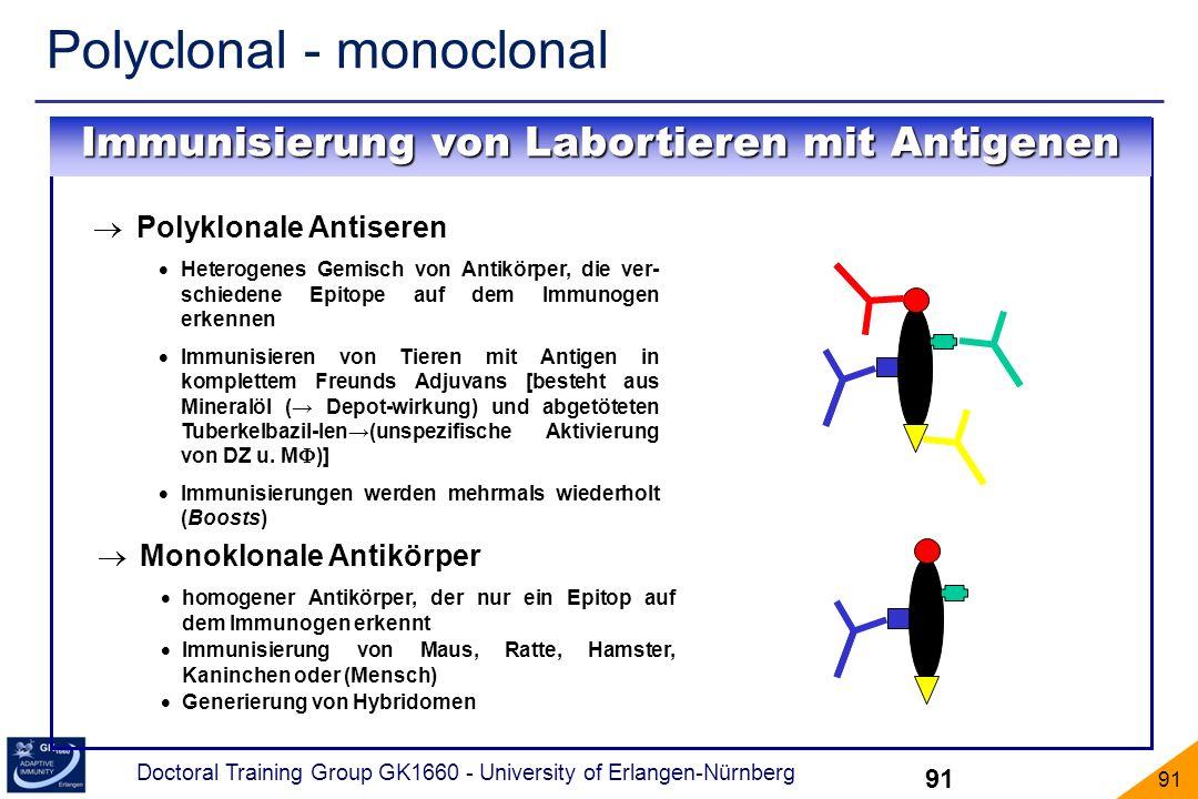 Doctoral Training Group GK1660 - University of Erlangen-Nürnberg 91 Polyclonal - monoclonal 91 Polyklonale Antiseren Heterogenes Gemisch von Antikörpe