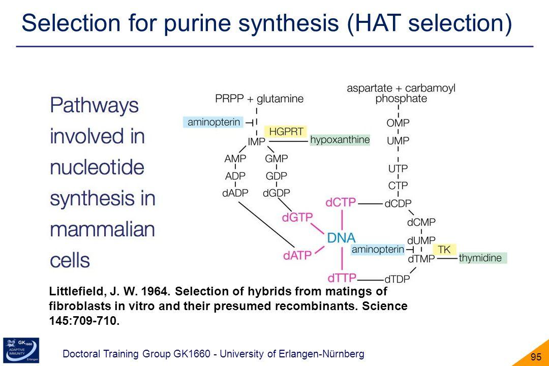 Doctoral Training Group GK1660 - University of Erlangen-Nürnberg 95 Selection for purine synthesis (HAT selection) Littlefield, J. W. 1964. Selection