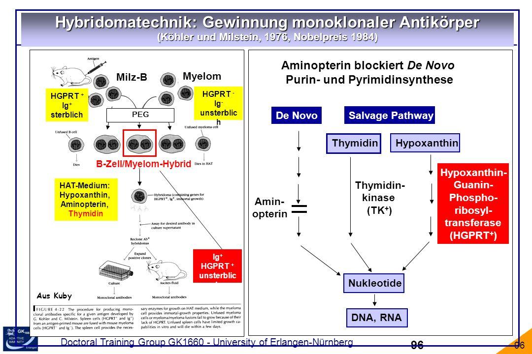 Doctoral Training Group GK1660 - University of Erlangen-Nürnberg 96 Aus Kuby Hypoxanthin Hypoxanthin- Guanin- Phospho- ribosyl- transferase (HGPRT + )