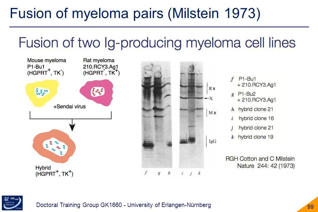 Doctoral Training Group GK1660 - University of Erlangen-Nürnberg 99 Fusion of myeloma pairs (Milstein 1973)