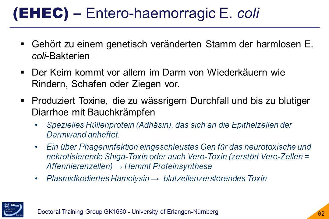 Doctoral Training Group GK1660 - University of Erlangen-Nürnberg 62 Gehört zu einem genetisch veränderten Stamm der harmlosen E. coli-Bakterien Der Ke