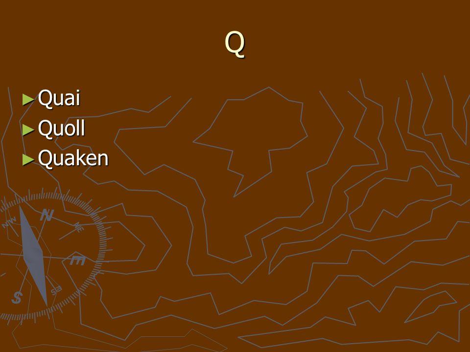 Q Quai Quai Quoll Quoll Quaken Quaken