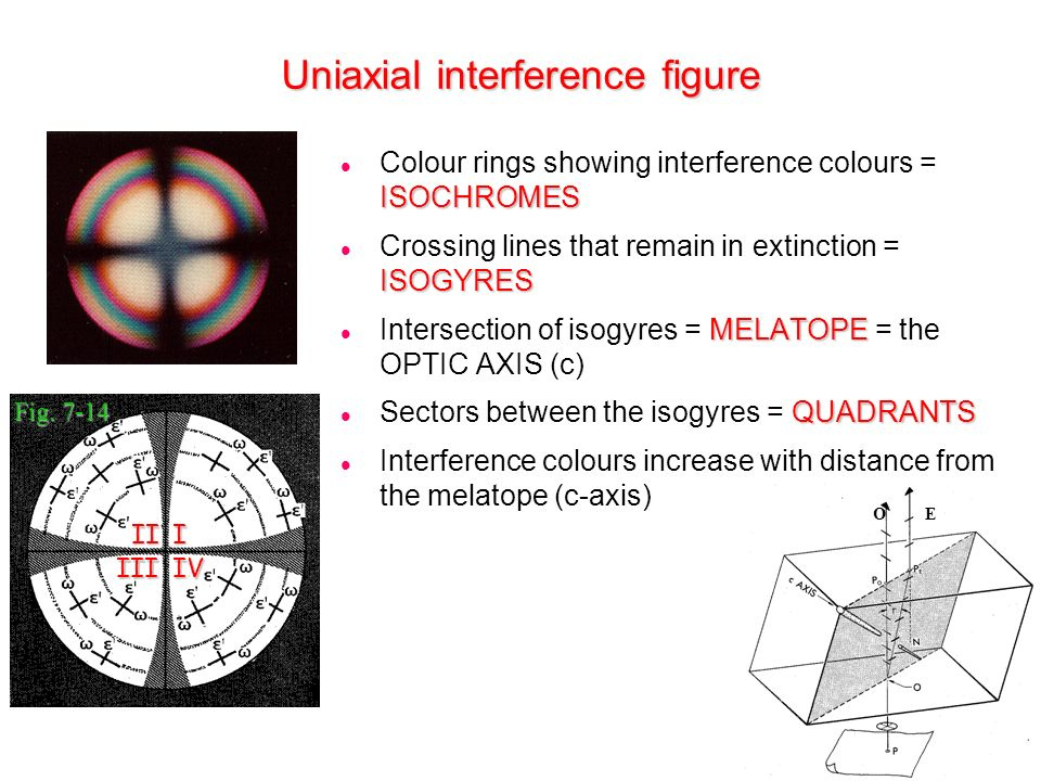 Uniaxial interference figure Fig. 7-14 O E ISOCHROMES Colour rings showing interference colours = ISOCHROMES ISOGYRES Crossing lines that remain in ex
