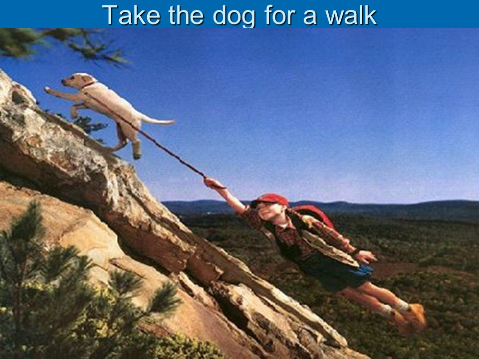 Take the dog for a walk