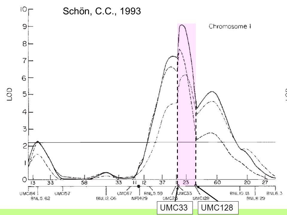 10 UMC33UMC128 Schön, C.C., 1993