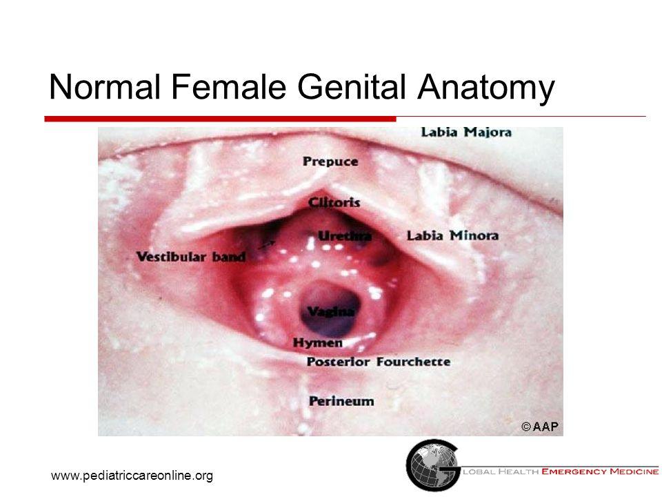 Normal Female Genital Anatomy www.pediatriccareonline.org