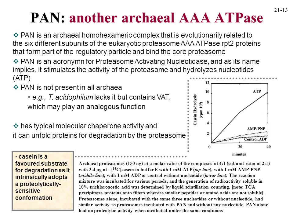 PAN: another archaeal AAA ATPase PAN is an archaeal homohexameric complex that is evolutionarily related to the six different subunits of the eukaryot