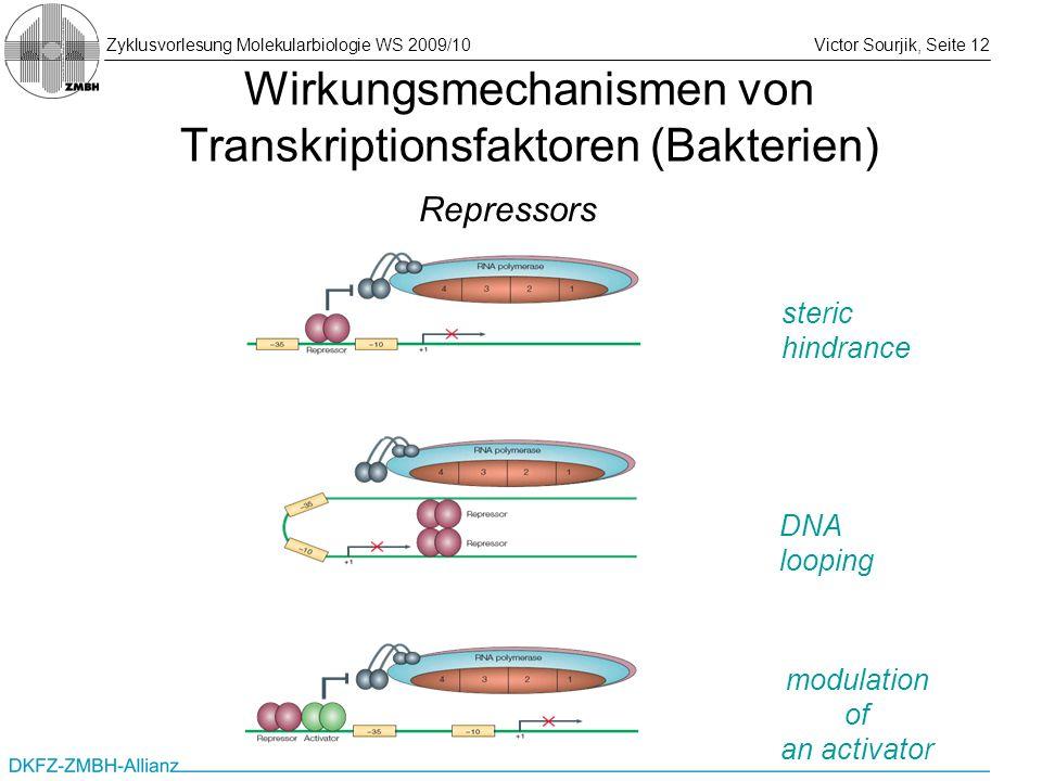 Zyklusvorlesung Molekularbiologie WS 2009/10Victor Sourjik, Seite 12 Wirkungsmechanismen von Transkriptionsfaktoren (Bakterien) steric hindrance DNA l