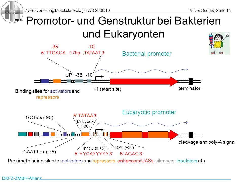Zyklusvorlesung Molekularbiologie WS 2009/10Victor Sourjik, Seite 14 Promotor- und Genstruktur bei Bakterien und Eukaryonten +1 (start site) terminato