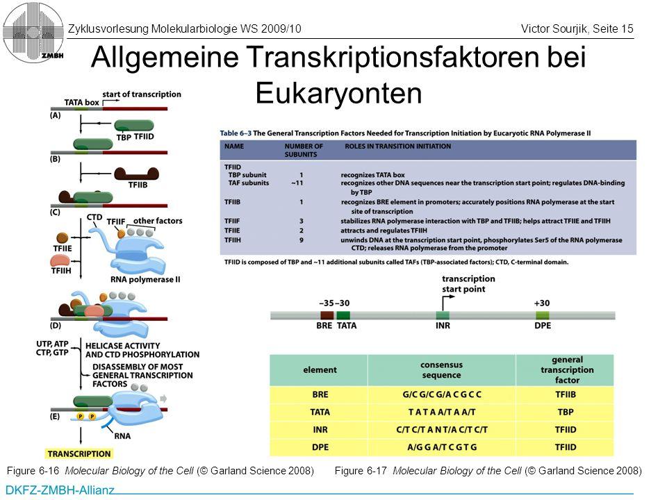 Zyklusvorlesung Molekularbiologie WS 2009/10Victor Sourjik, Seite 15 Allgemeine Transkriptionsfaktoren bei Eukaryonten Figure 6-16 Molecular Biology o