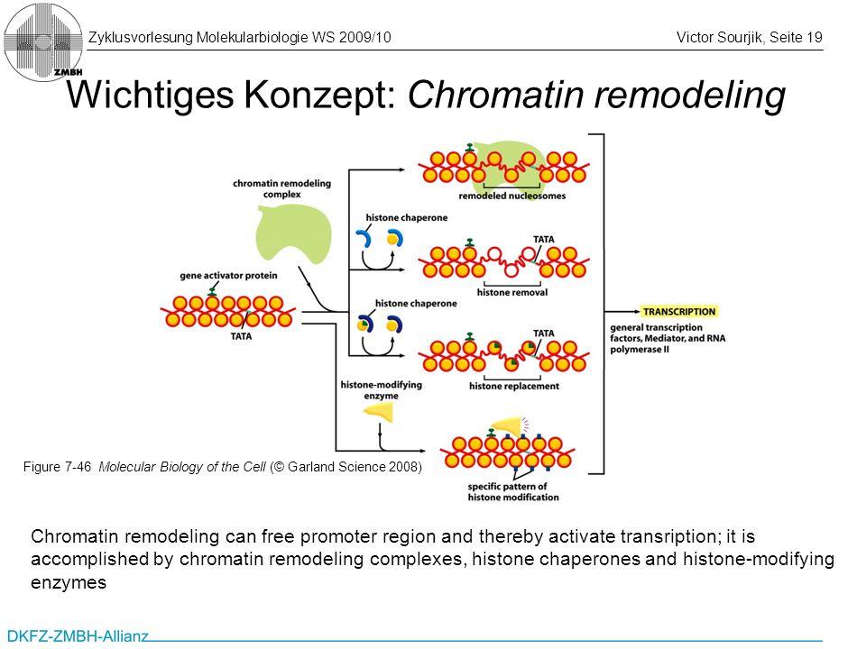 Zyklusvorlesung Molekularbiologie WS 2009/10Victor Sourjik, Seite 19 Wichtiges Konzept: Chromatin remodeling Chromatin remodeling can free promoter re