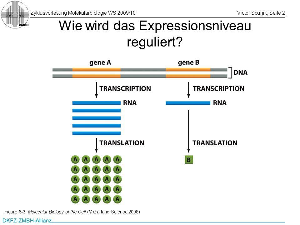 Zyklusvorlesung Molekularbiologie WS 2009/10Victor Sourjik, Seite 2 Wie wird das Expressionsniveau reguliert? Figure 6-3 Molecular Biology of the Cell