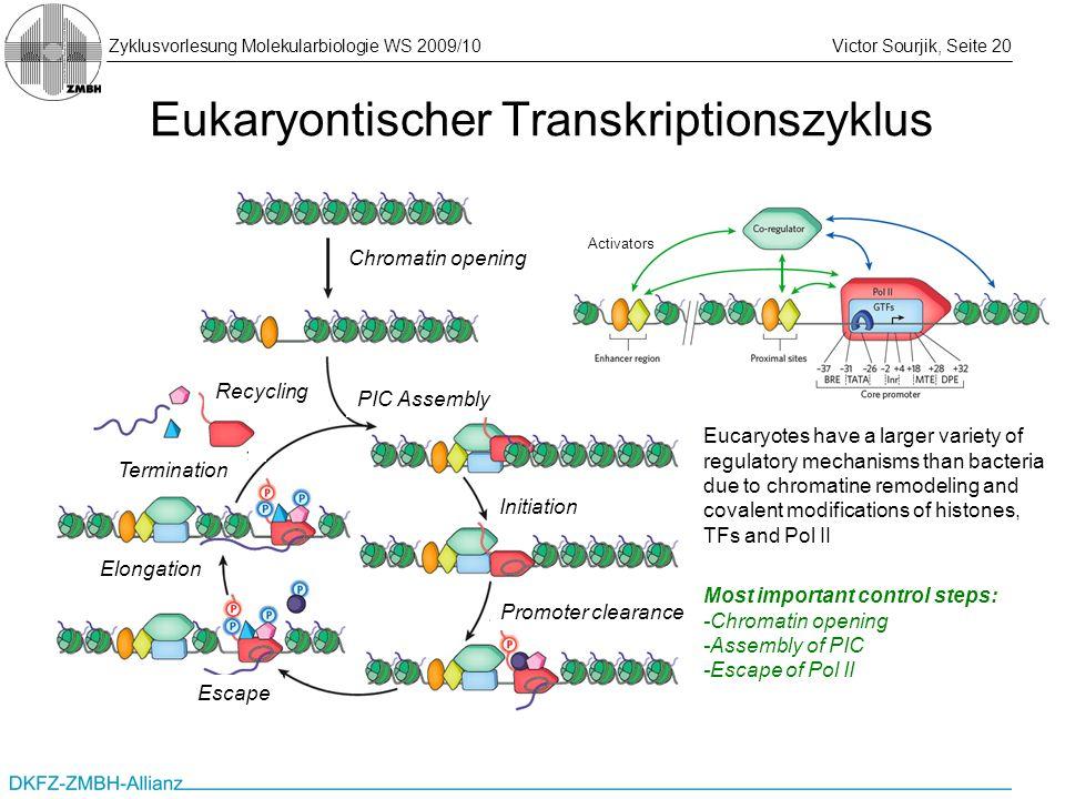 Zyklusvorlesung Molekularbiologie WS 2009/10Victor Sourjik, Seite 20 Eukaryontischer Transkriptionszyklus Chromatin opening PIC Assembly Initiation Pr