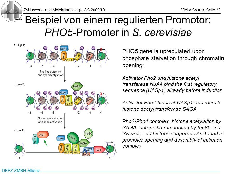 Zyklusvorlesung Molekularbiologie WS 2009/10Victor Sourjik, Seite 22 Beispiel von einem regulierten Promotor: PHO5-Promoter in S. cerevisiae PHO5 gene