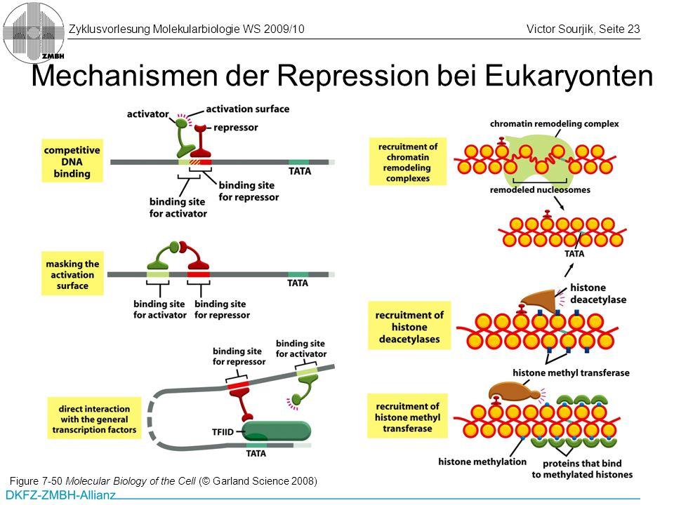 Zyklusvorlesung Molekularbiologie WS 2009/10Victor Sourjik, Seite 23 Mechanismen der Repression bei Eukaryonten Figure 7-50 Molecular Biology of the C