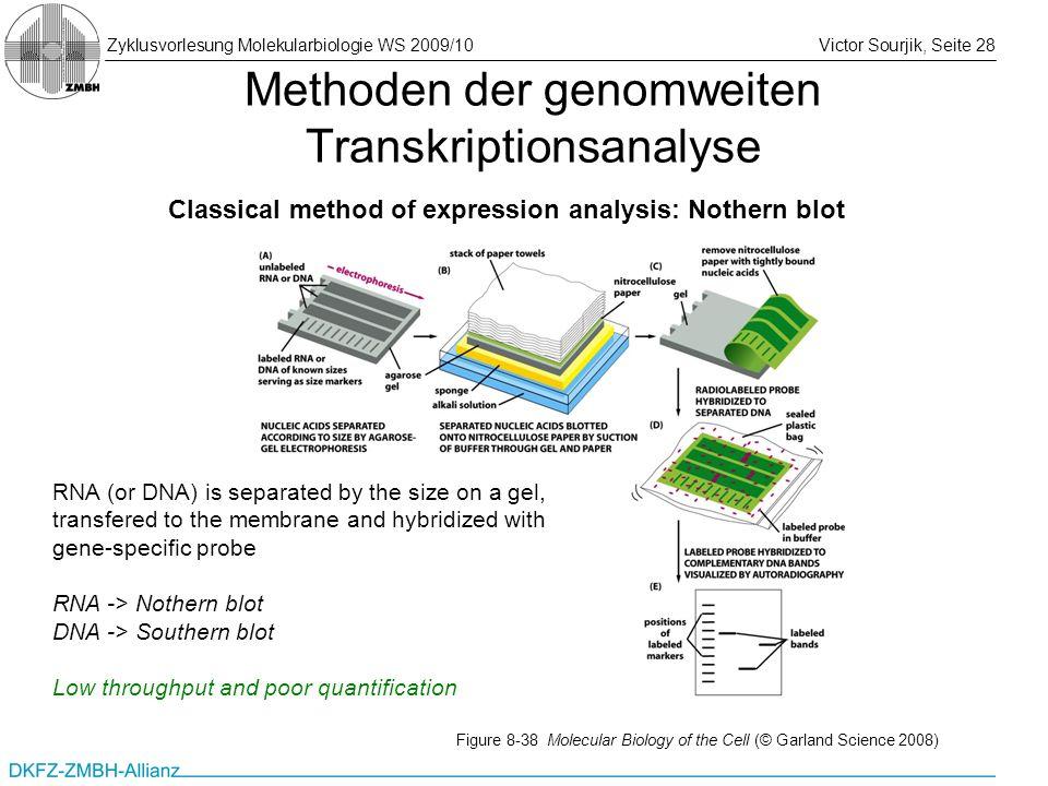 Zyklusvorlesung Molekularbiologie WS 2009/10Victor Sourjik, Seite 28 Methoden der genomweiten Transkriptionsanalyse Classical method of expression ana