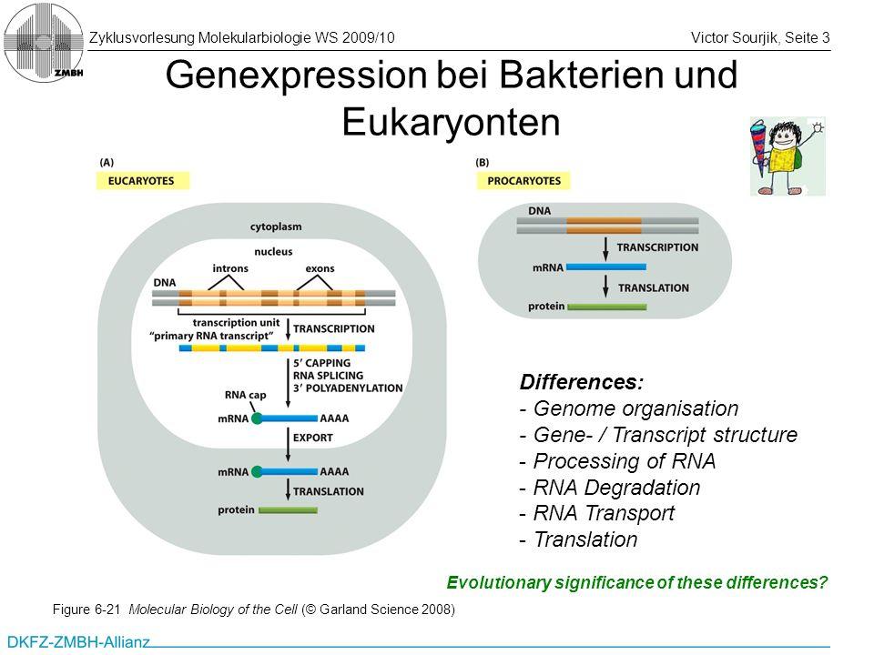 Zyklusvorlesung Molekularbiologie WS 2009/10Victor Sourjik, Seite 3 Genexpression bei Bakterien und Eukaryonten Figure 6-21 Molecular Biology of the C